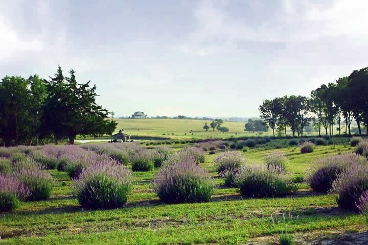 Chappell Hill farm