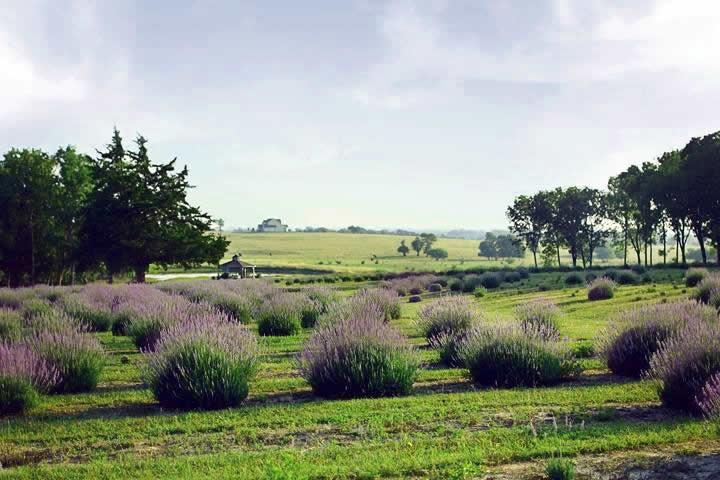 Chappell Hill farm