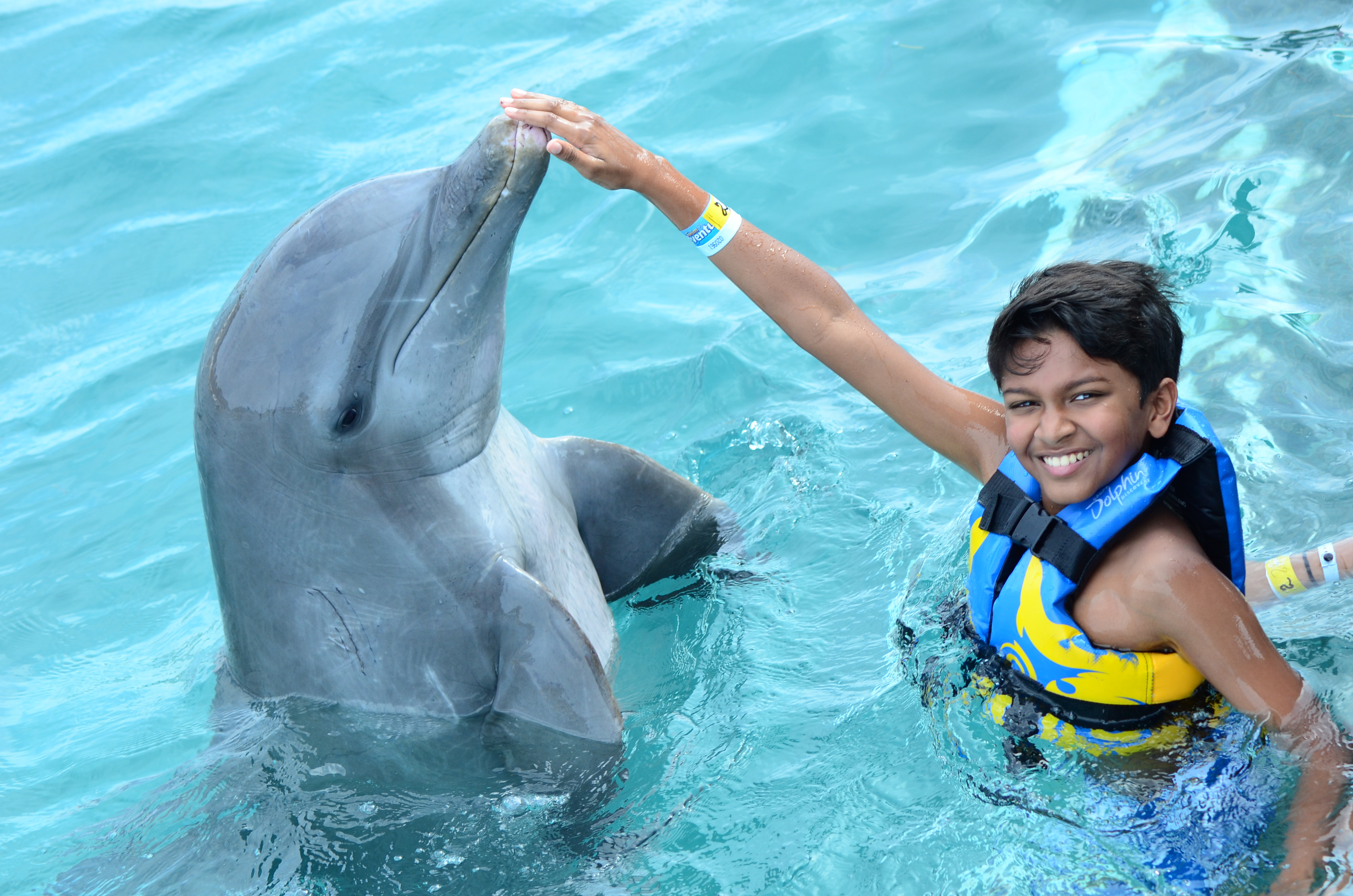 Kissing Dolphins in Cancun • Outside Suburbia Travel