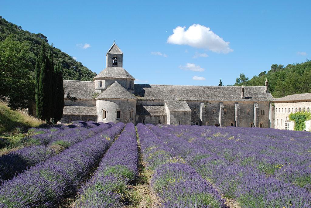 Lavender-senanque