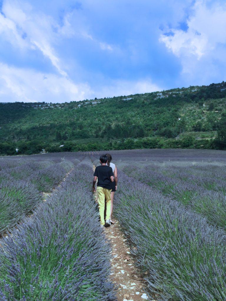 Lavender - Outside suburbia2
