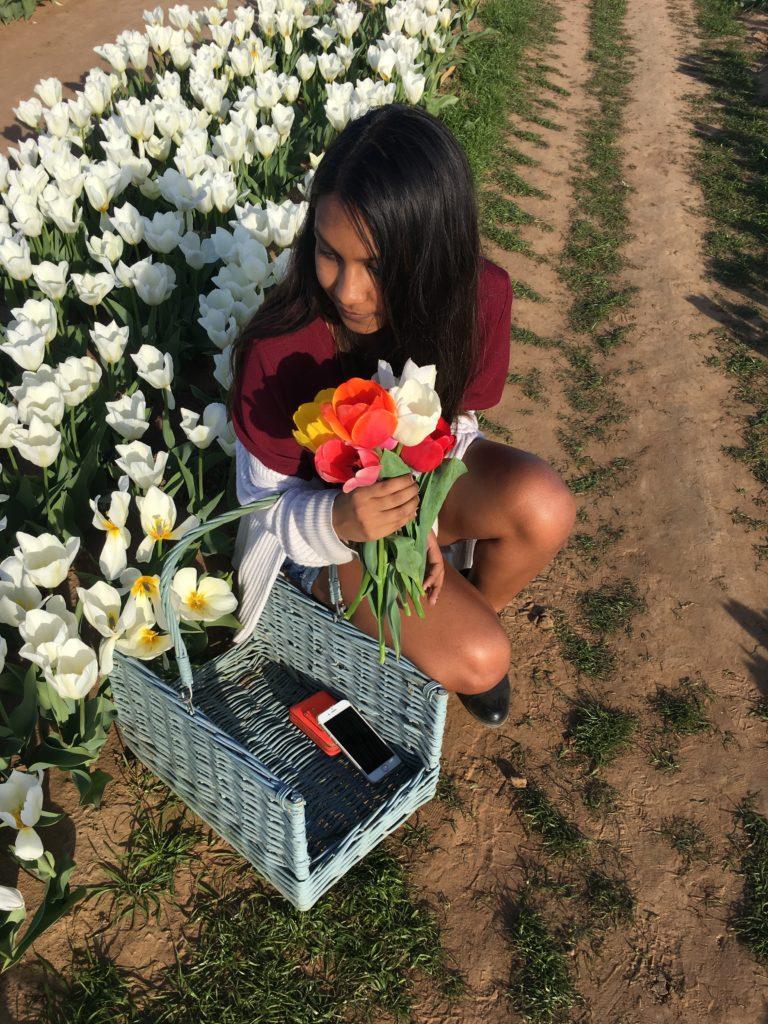 Cut your stems at Texas Tulips. Tulip farm near Dallas, Texas
