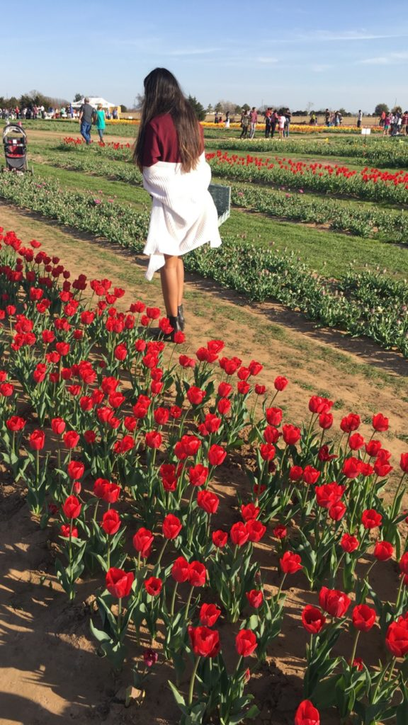 A texas tulip farm with roots in netherlands outside suburbia for Tulip garden in texas