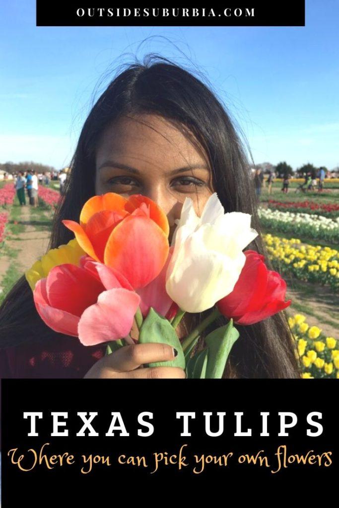 Texas Tulips: A Tulip field near Dallas | Outside Suburbia