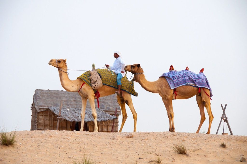 Desert Adventures in Dubai | Outside Suburbia