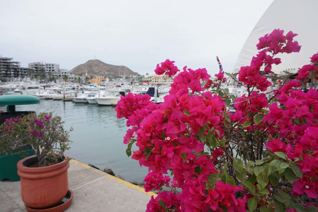 Best things to do in Cabo, Mexico | OutsideSuburbia