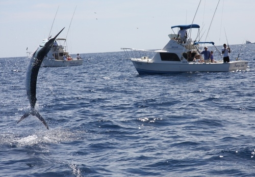 Fishing for Marlin in Cabo San Lucas, Mexico -- Photo by Outside Suburbia