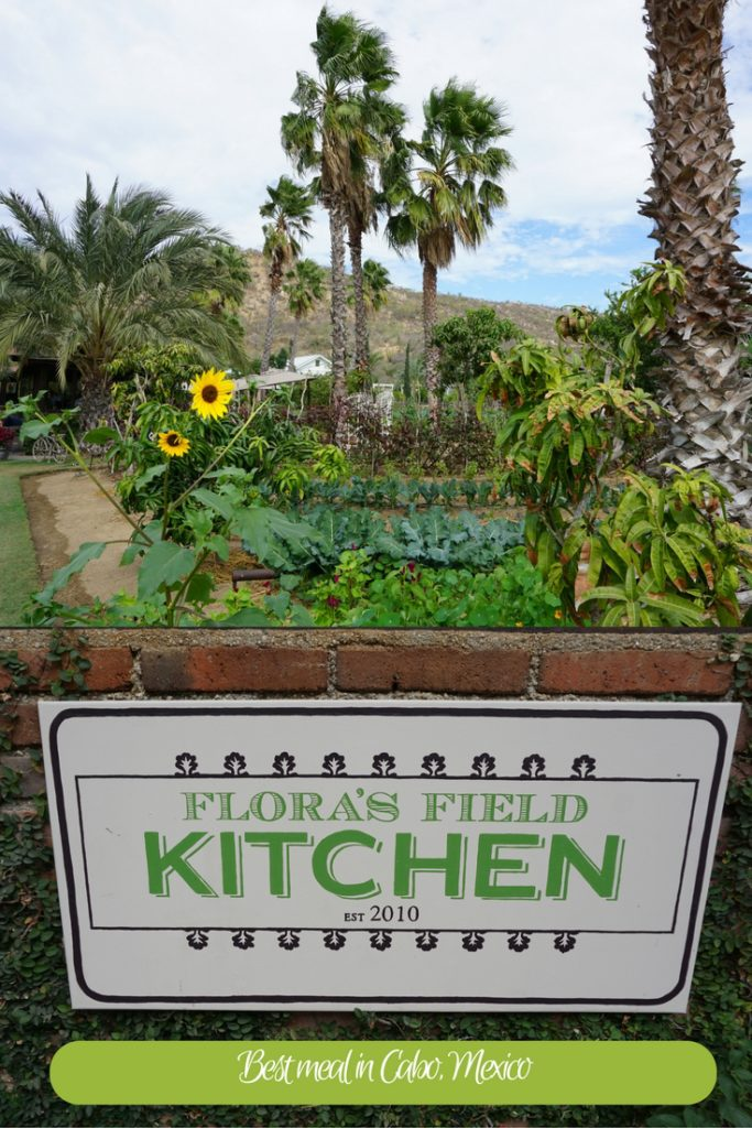 When in Cabo make a trip to Flora Farm, an organic farm in the foothills of the Sierra de la Laguna Mountains in San Jose del Cabo, Mexico for lunch or dinner. Just a short drive from the resorts in Cabo but worlds away! #OutsideSuburbia #CaboThingsToDo #CaboWithKids #whattodoinCabo #LosCaboMexico
