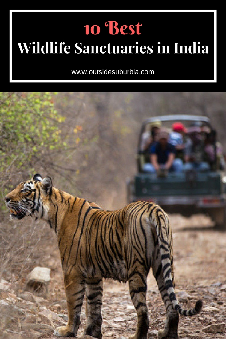 10 Best Wildlife Sanctuaries in India set up by the government to protect endangered and rare species of animals. See this list for best wildlife viewing experiences in India. These Wildlife Sanctuaries in India must be in your list if you want to see Bengal Tigers, Elephants, one-horned rhinoceroses and more. #OutsideSuburbia #WildlifeSanctuariesIndia #IndiaBucketlist #IndiaWildlife #SafariInIndia #IndiaSafari