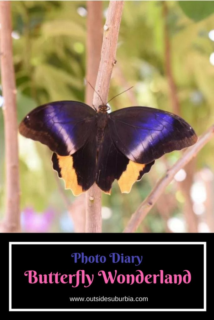 Butterfly Wonderland, Scottsdale: One of my Happy Places | Outside Suburbia