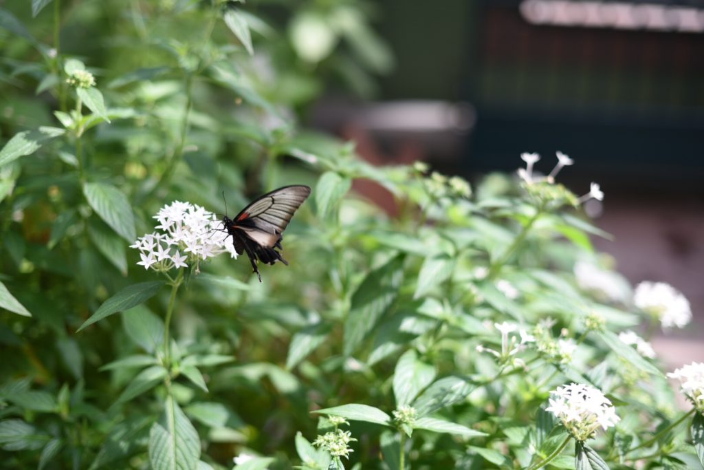 Butterfly Wonderland : One of my Happy Places in Scottsdale Arizona - outsidesuburbia.com