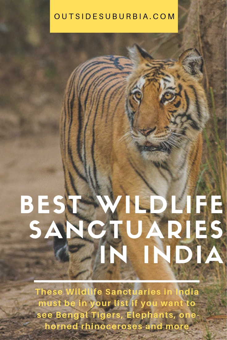 These Wildlife Sanctuaries in India must be in your list if you want to see Bengal Tigers, Elephants, one-horned rhinoceroses and more