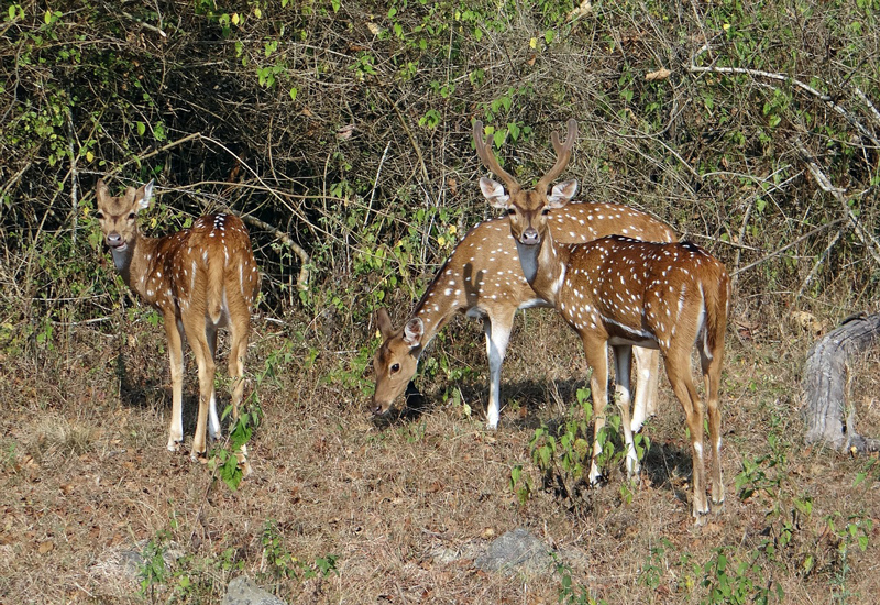 Best Wildlife Sanctuaries in India