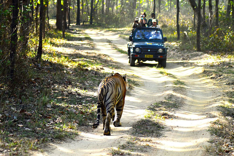 10 Best Wildlife Sanctuaries in India