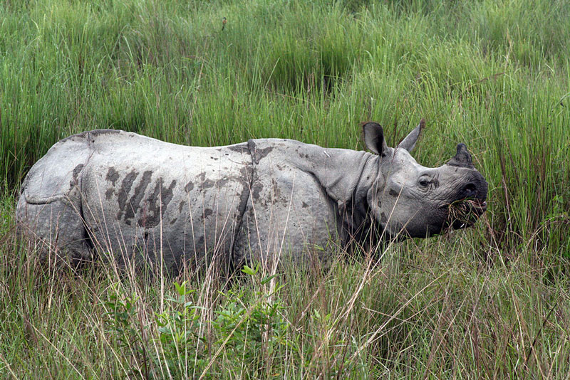 One horned Indian Rhina - 10 Best Wildlife Sanctuaries in India