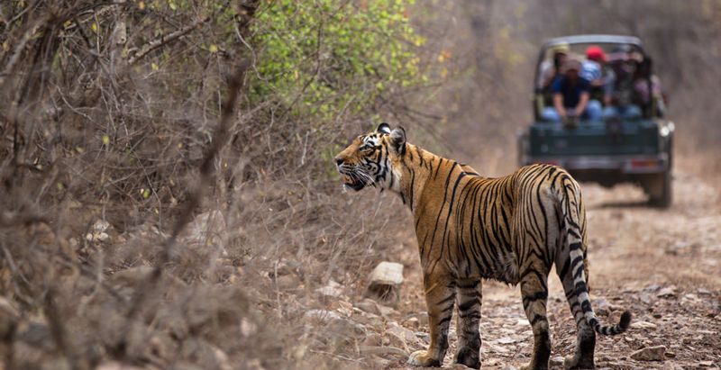 10 Best Wildlife Sanctuaries in India that you must visit - OutsideSuburbia.com