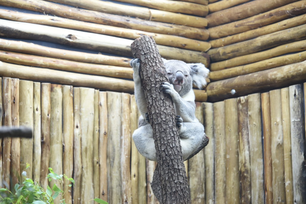 9 Best things to do at the Dallas Zoo - outsidesuburbia.com
