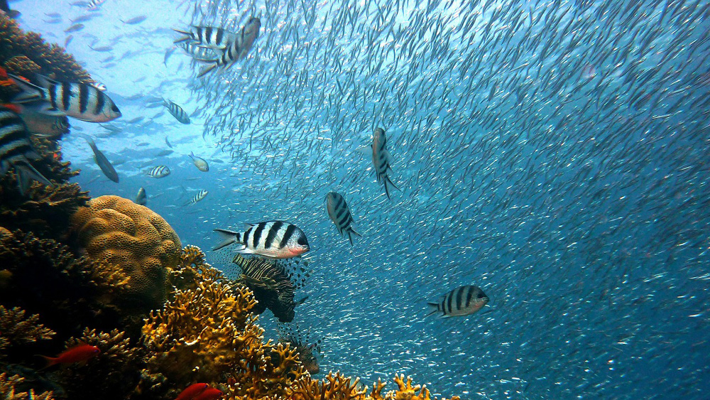Snorkeling Safari - Kwazulu Natal