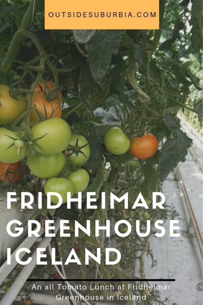 A visit to the Fridheimar Greenhouse in Iceland | Outside Suburbia
