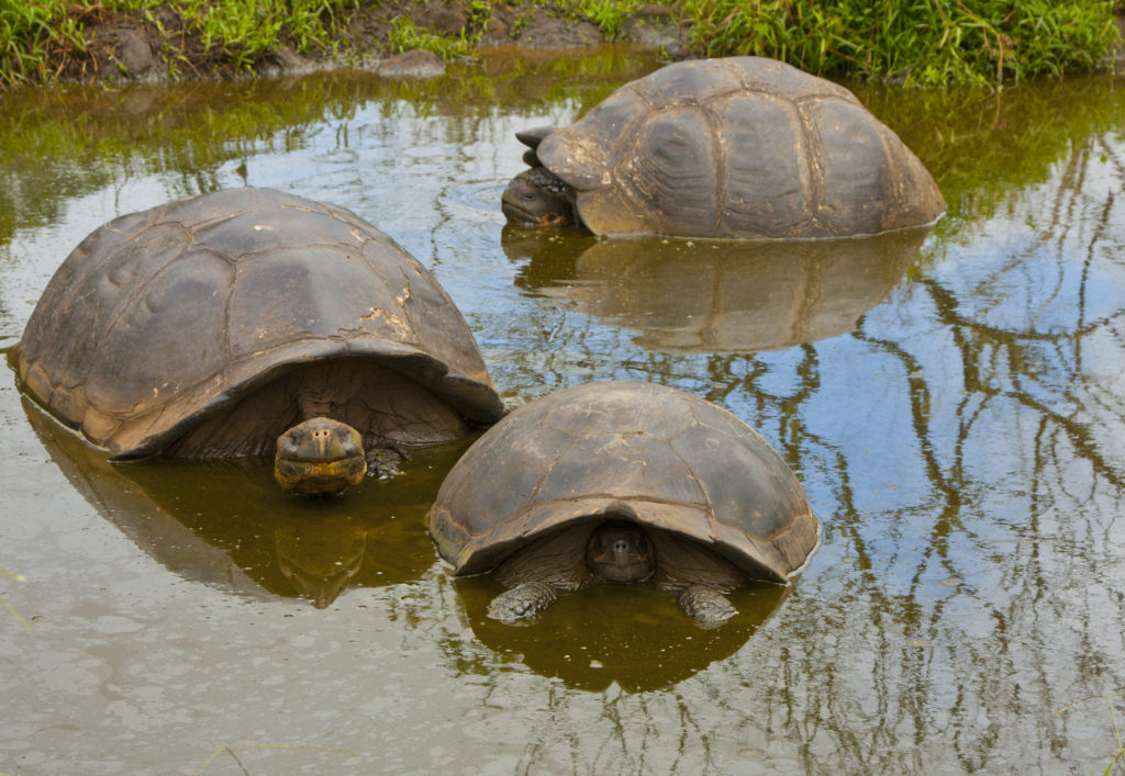 Top Trips for Teenagers - See Turtles in Galapagos Islands