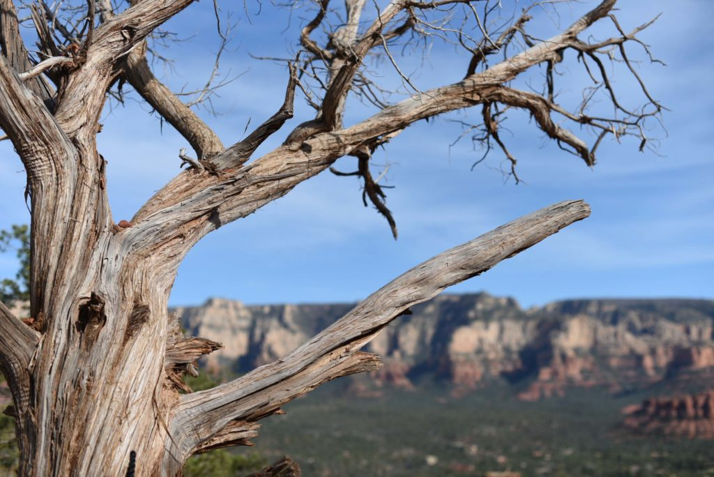 Sedona Vortex hikes, Twisted trees along the Bell Rock Climb - Photo by Outside Suburbia