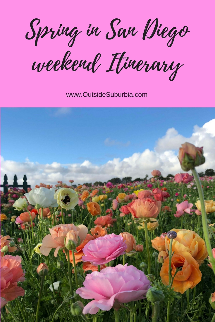 Visit zoo and museums in Balboa park, stop by Embarcadero, drive to La Jolla for a day and see the Flowerfields in Carlsbad : San Diego weekend itinerary #OutsideSuburbia #SanDiegoWeekend #3daysinSanDiego