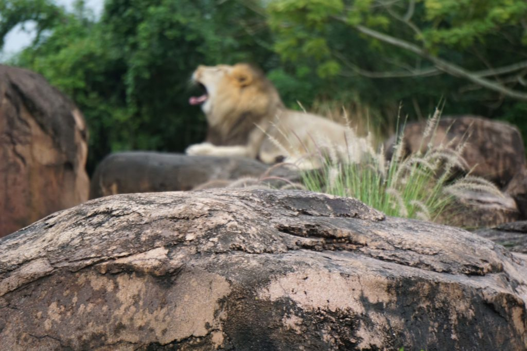 Kilimanjaro Safari Tour : The biggest tour in Disney's Animal Kingdom - Photo by OutsideSuburbia