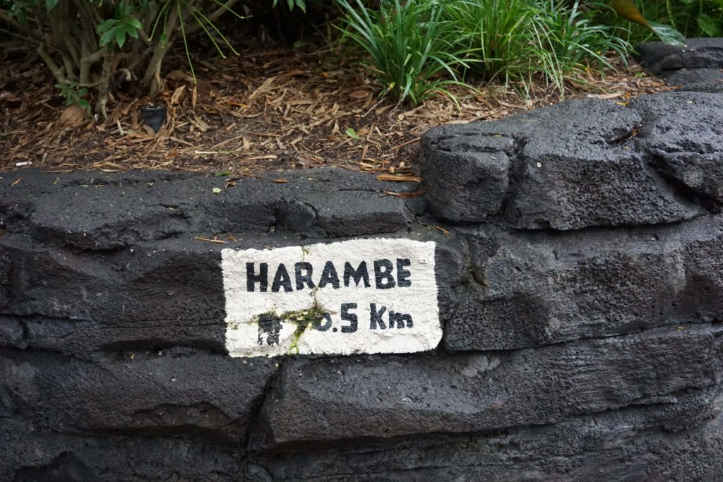 Before you know it you are transported to Harambe from Orlando, Florida