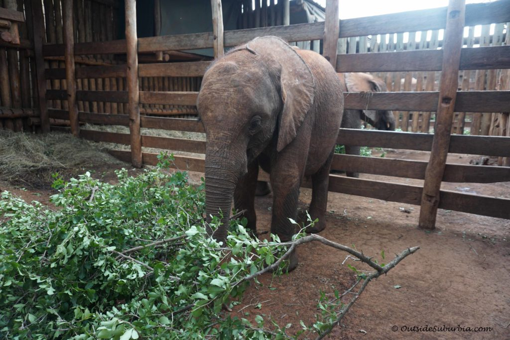 A visit to the David Sheldrick Wildlife Trust Orphanage | OutsideSuburbia