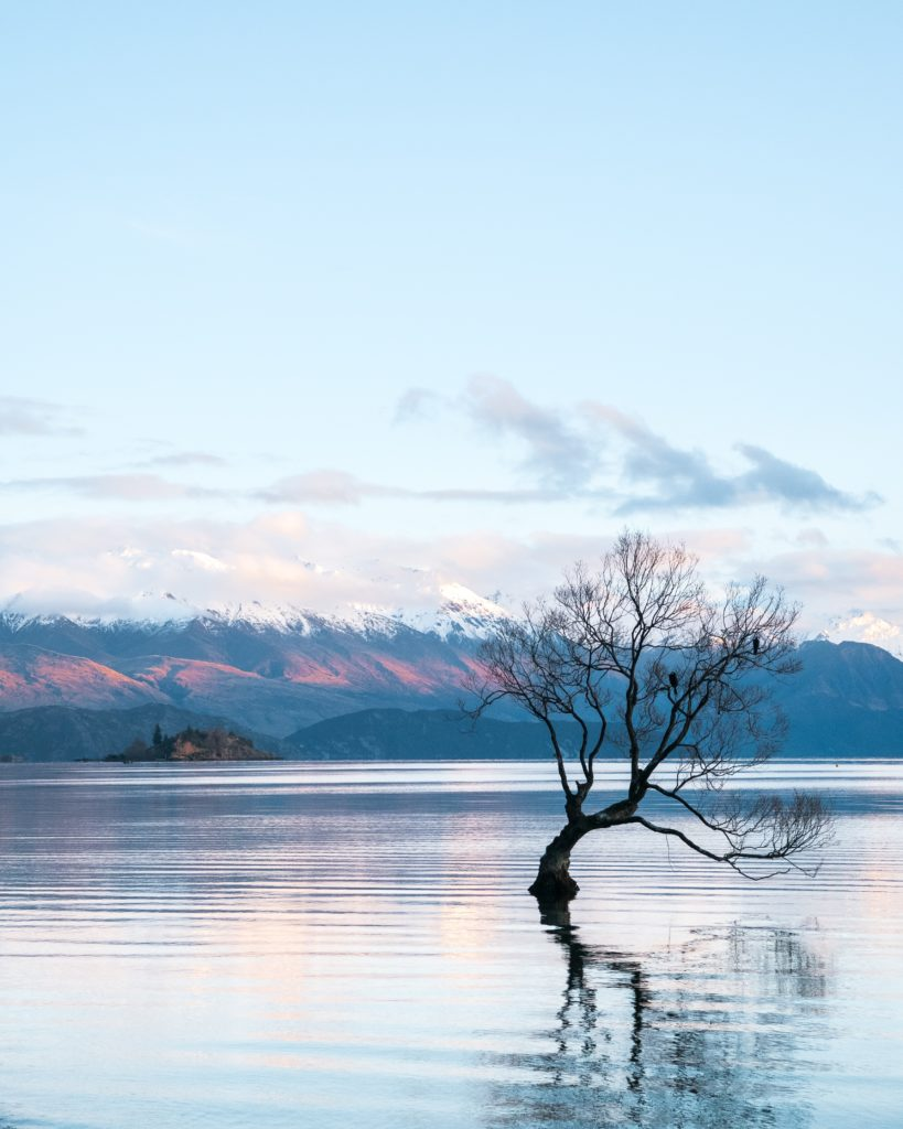 Lake Wanaka's famous solitary tree in New Zealand | Outside Suburbia