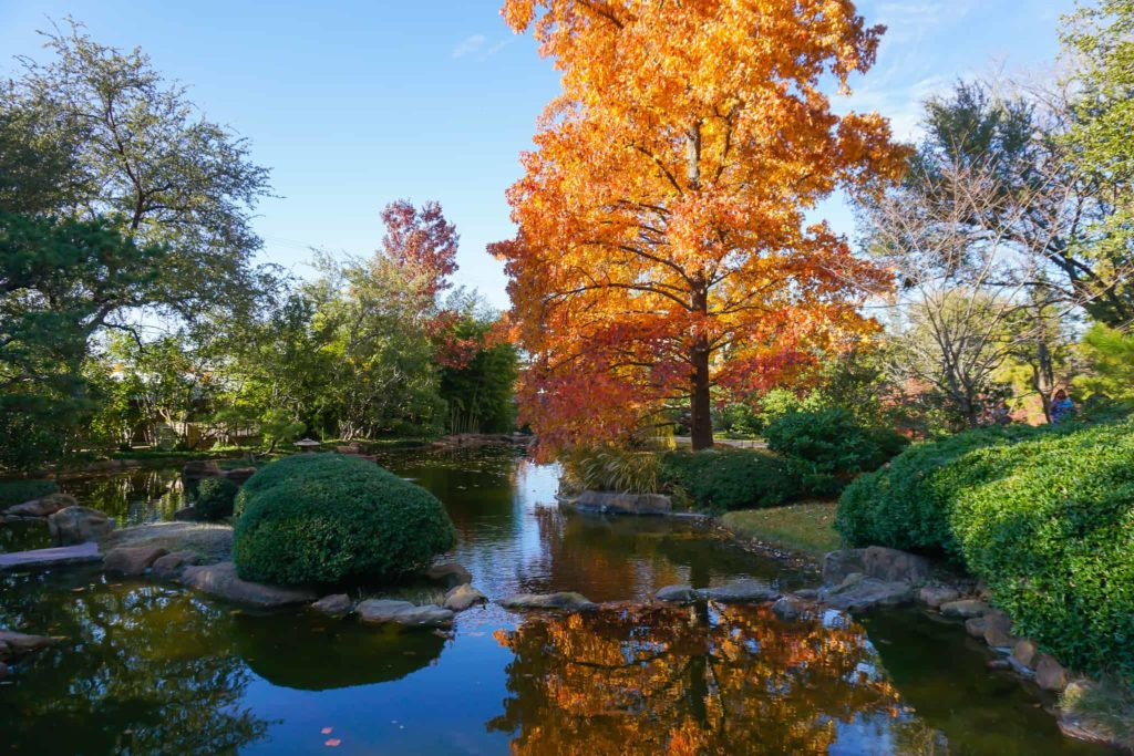 Where to find Fall colors in Fort Worth - Photo by Priya Vin @OutsideSuburbia