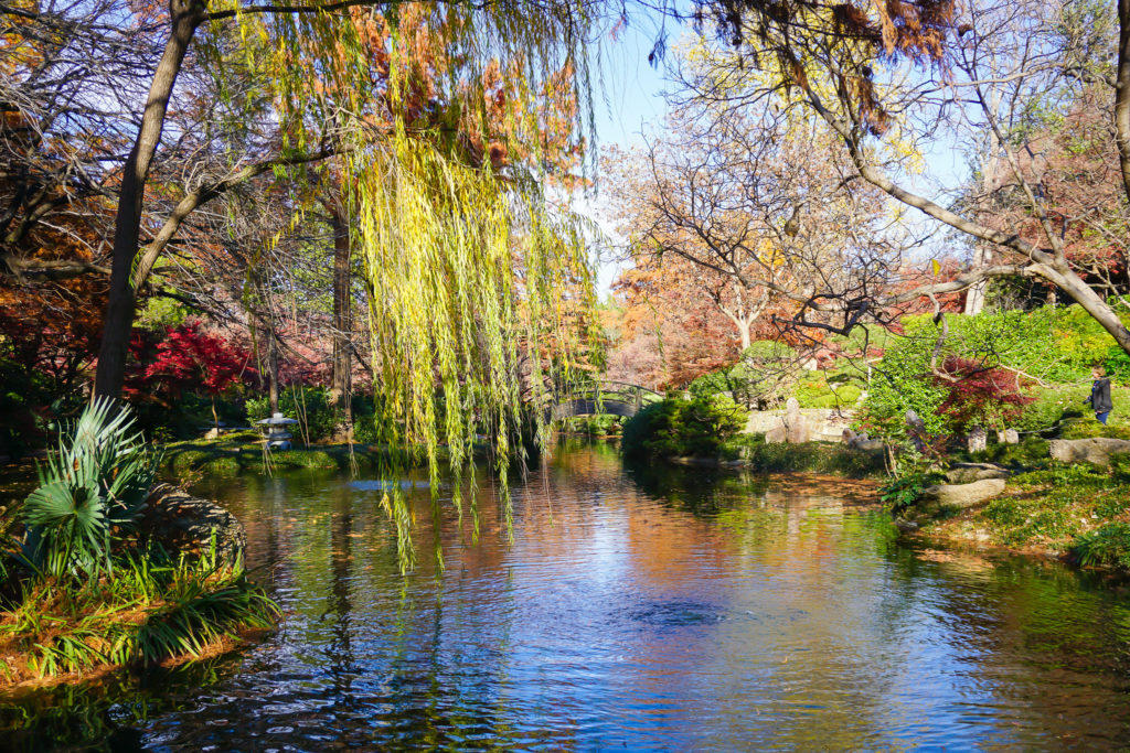 Where to find Fall colors in Fort Worth - Photo by @OutsideSuburbia