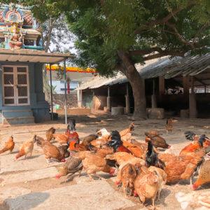 The Farm Chennai