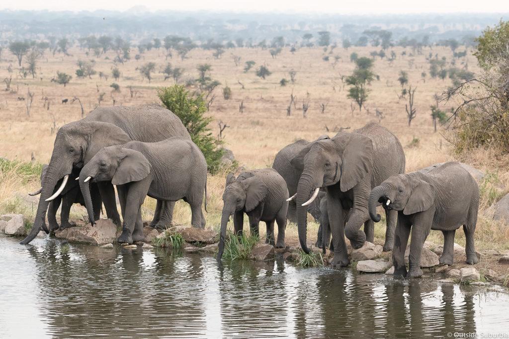 Waterhole at the Lodge. Four Seasons Safari Lodge Serengeti Review - Photo by Priya, Outside Suburbia