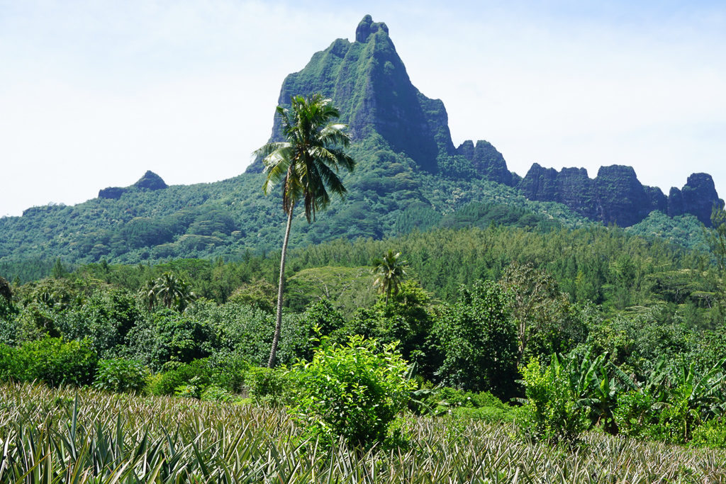 Moorea, French Polynesia - Photo by OutsideSuburbia.com