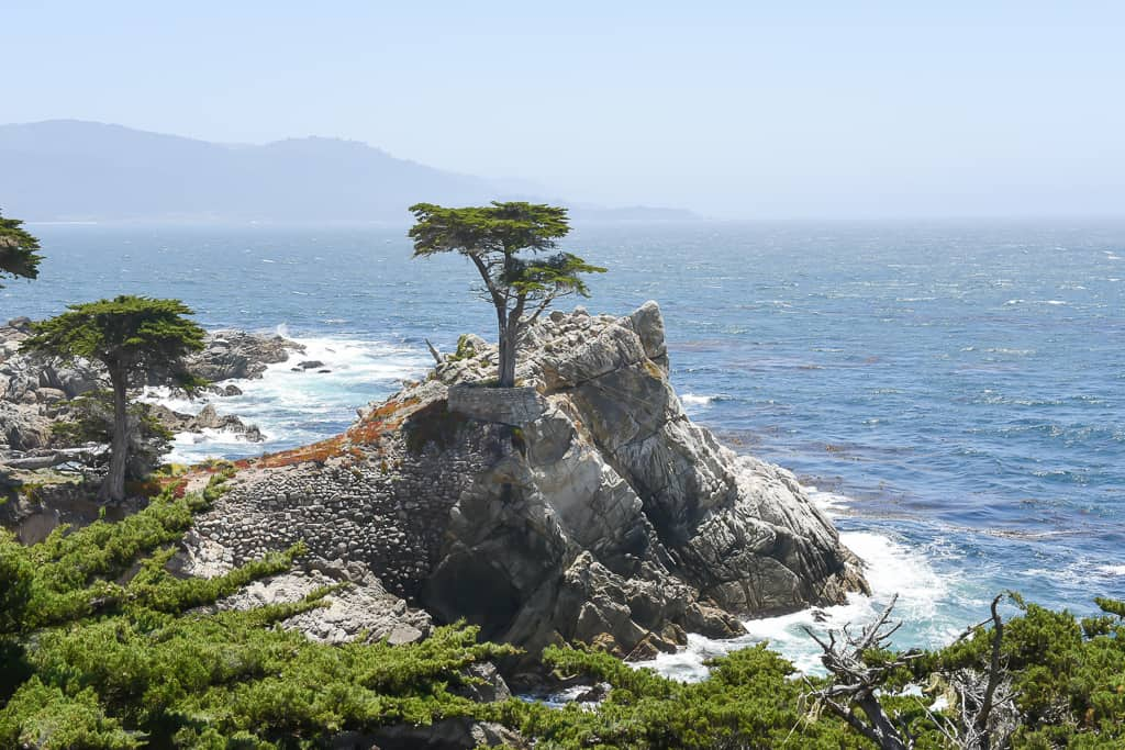 Lone Cypress, 17 mile drive, California - Photo by Outside Suburbia