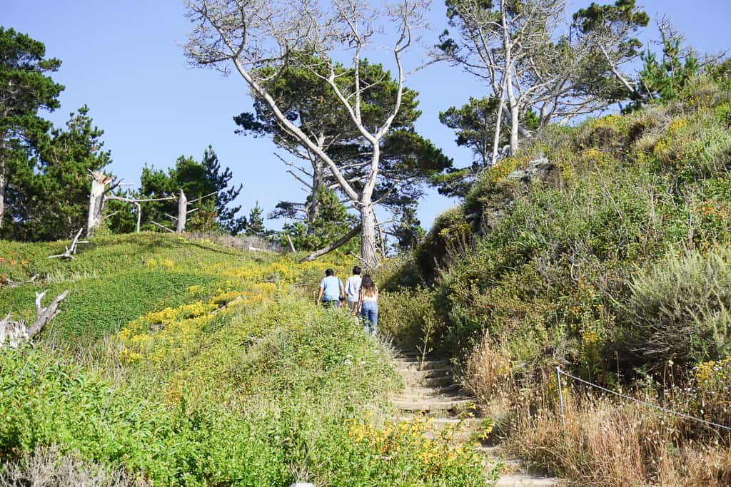 Trails at Point Lobos State National Reserve - Photo by Outside Suburbia
