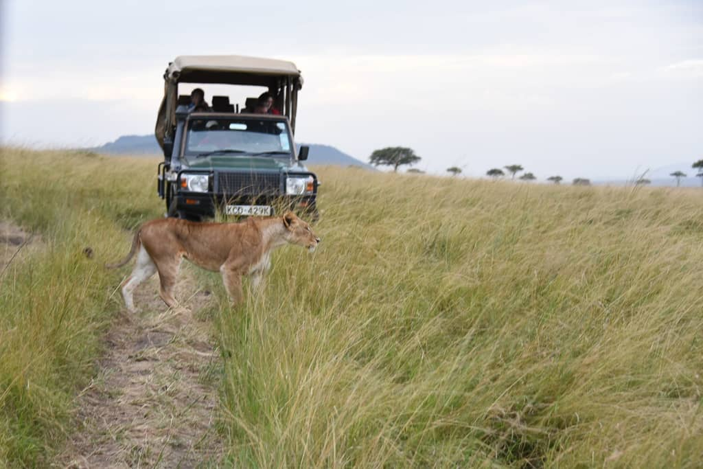 Kenya Safari - Luxury Family Safari Experience at Angama Mara, Kenya Photo by Outside Suburbia