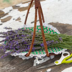 Cut your own lavender | Lavender Fields and Farms in Texas | OutsideSuburbia