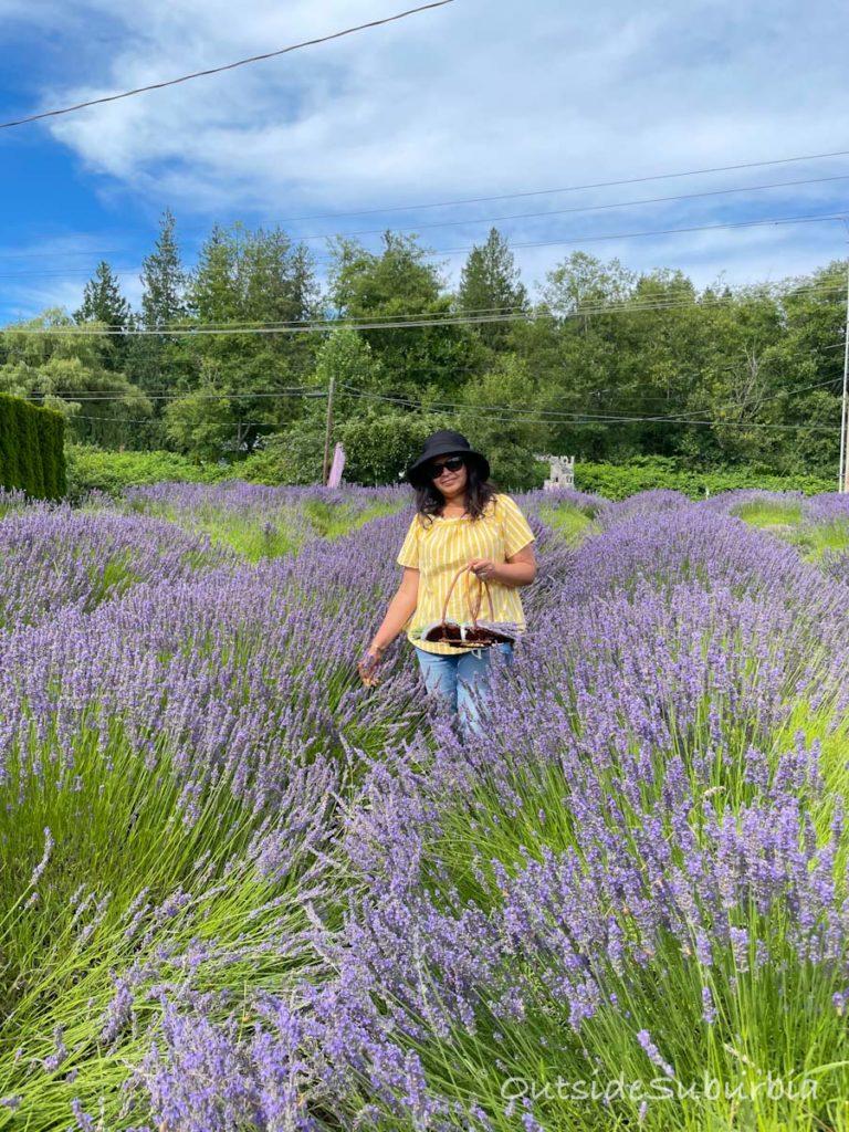 Lavender Fields in Texas   Priya Vin