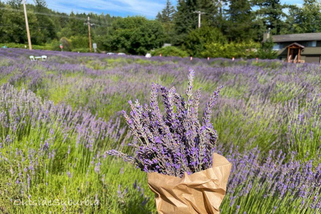 Lavender Recipes   OutsideSuburbia