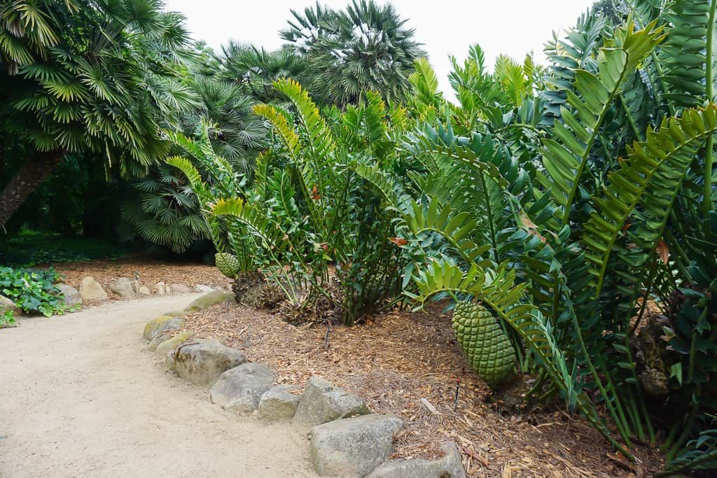 Cycads at Lotusland, One of the Best Gardens in the World - Photo by OutsideSuburbia.com