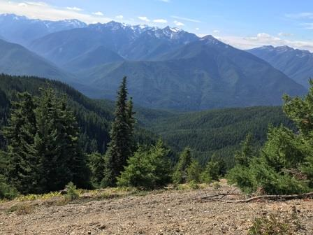 Short & Easy Hikes in Olympic National Park, Washington -  Best US National Parks for families - OutsideSuburbia.com