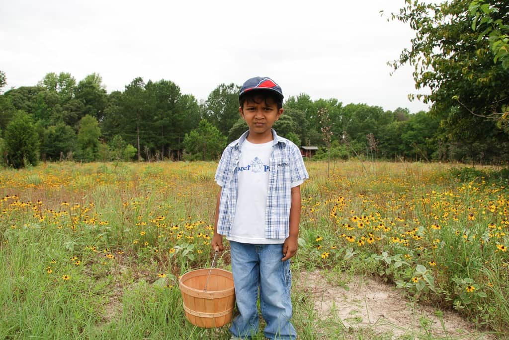 Blueberry picking in a Farm near Dallas a few years ago   Outside Suburbia