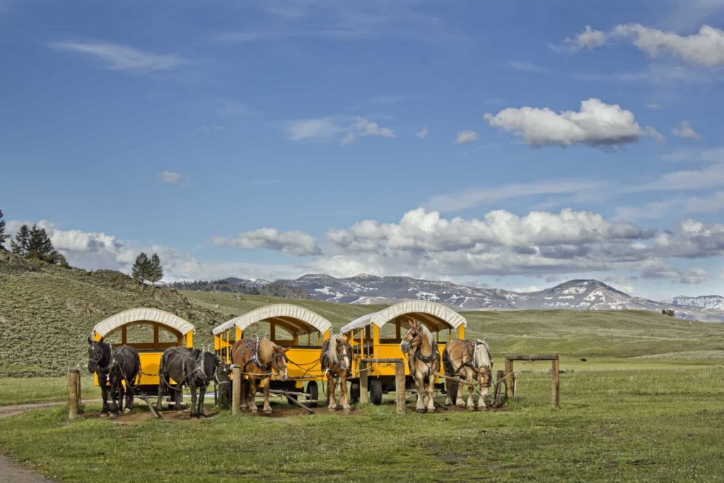 Wagon rides at Yellowstone National Park