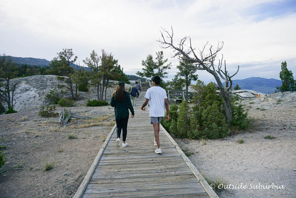 Boardwalk to the Mammoth Hotspring. Best things to do in Yellowstone - Relax in a hammock by the water! OutsideSuburbia.com