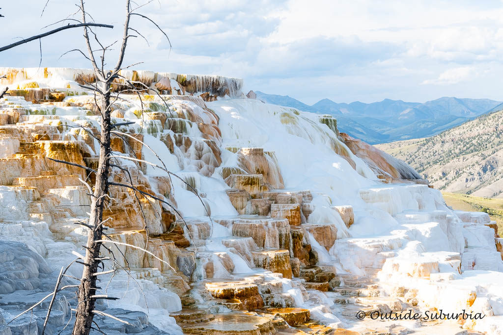 Best things to see in Yellowstone -  Mammoth Hot Spring Terrace! OutsideSuburbia.com