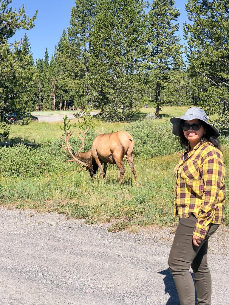 Where to see Wildlife inYellowstone National Park - Photo by OutsideSuburbia.com