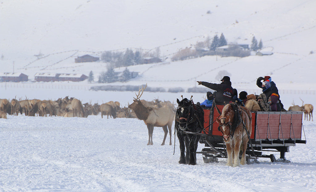 Winter Sleigh Rides - Things to do in Jackson Hole, Wyoming in Summer and Fall - OutsideSuburbia.com