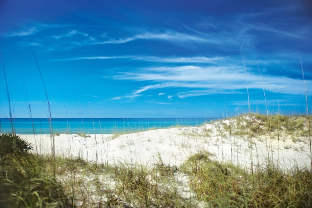 Pick shells and see wild dolphins near Shell island in Panama City Beach